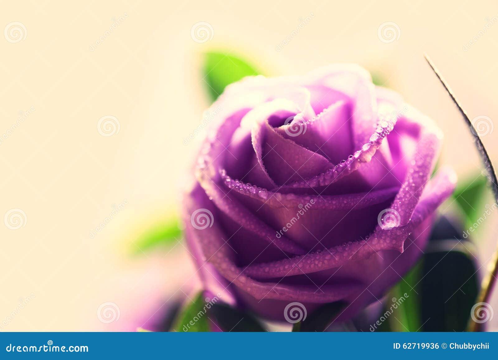 Μαλακό και γλυκό εκλεκτής ποιότητας λουλούδι