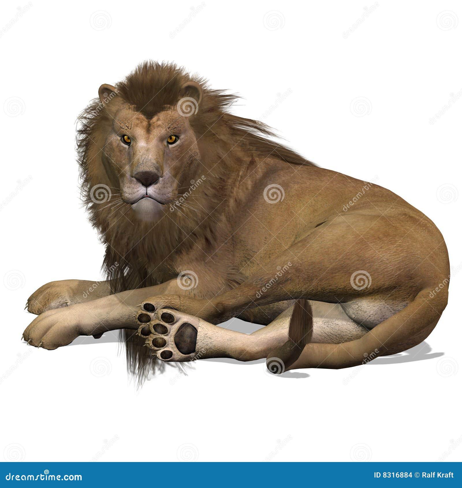 μεγάλο αρσενικό λιονταρ