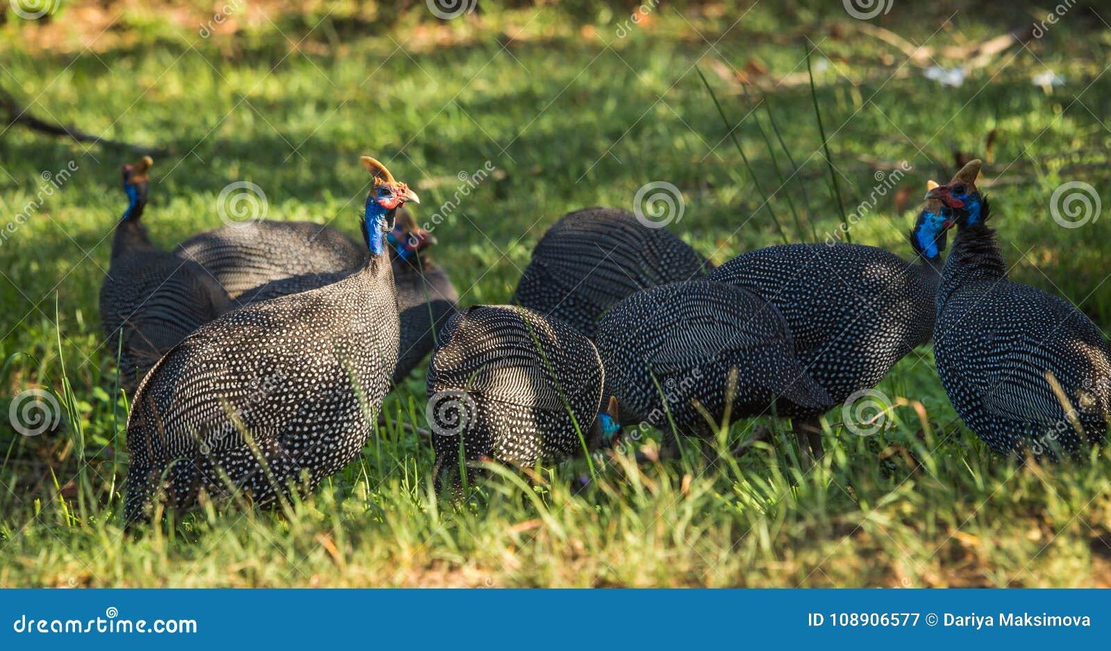 Μεγάλο μεγάλο μαύρο πουλί