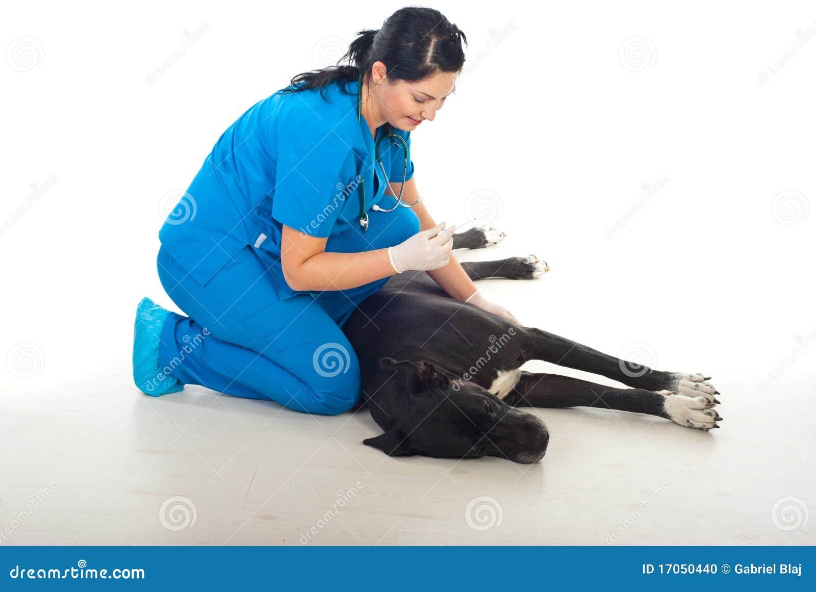 μεγάλο σκυλί που παίρνε&iota