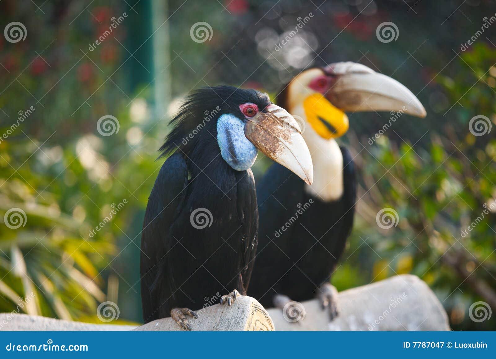 αγαπά το μεγάλο πουλί του