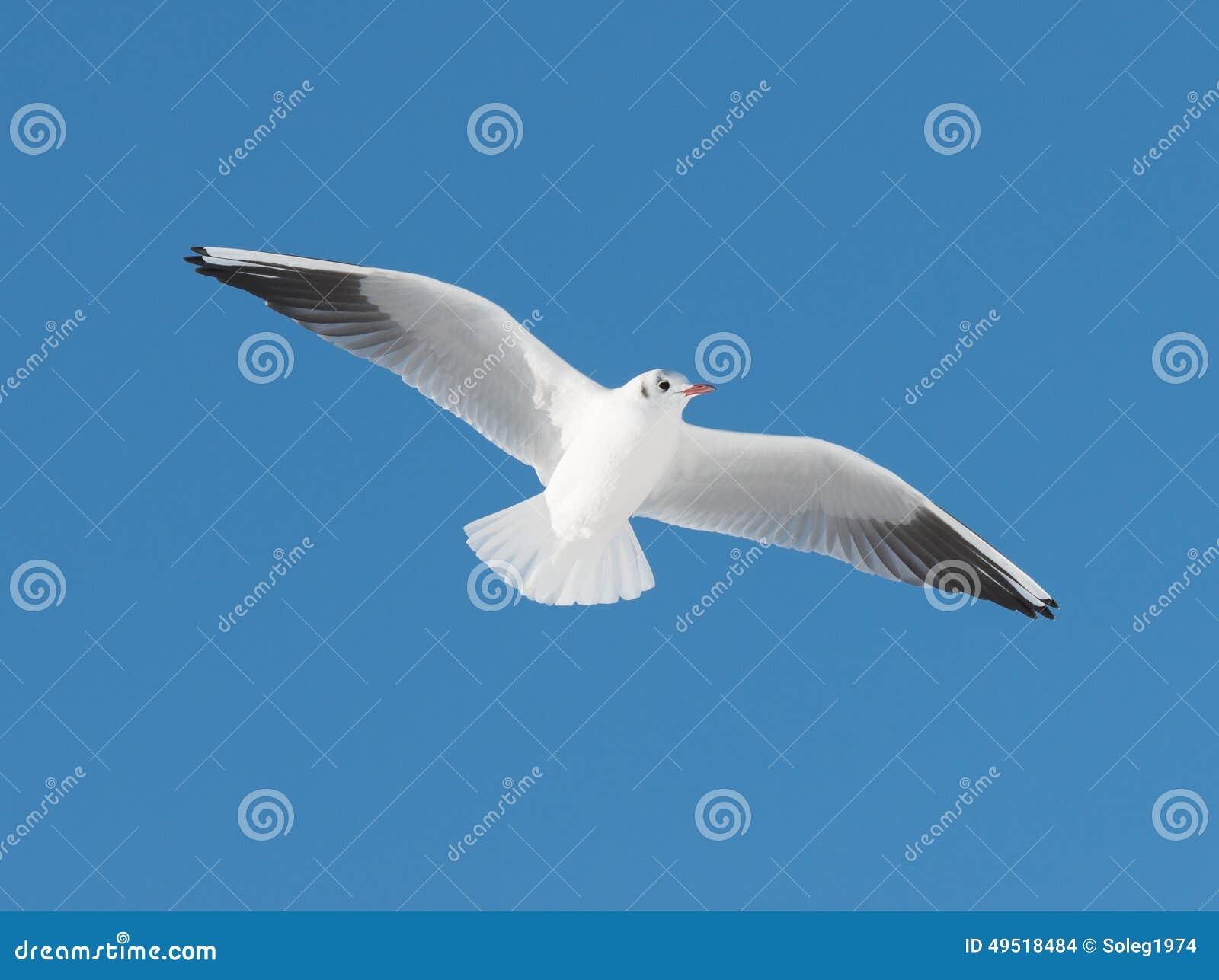 Κάστρος μεγάλο πουλί Πώς μπορείτε να δώσετε μια καταπληκτική πίπα