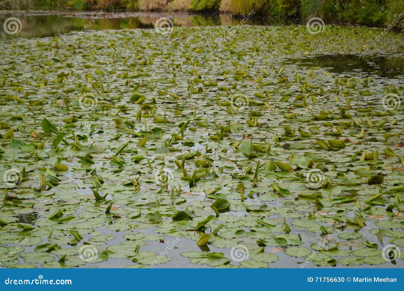 Μεγάλη λίμνη διακοσμητικών κήπων