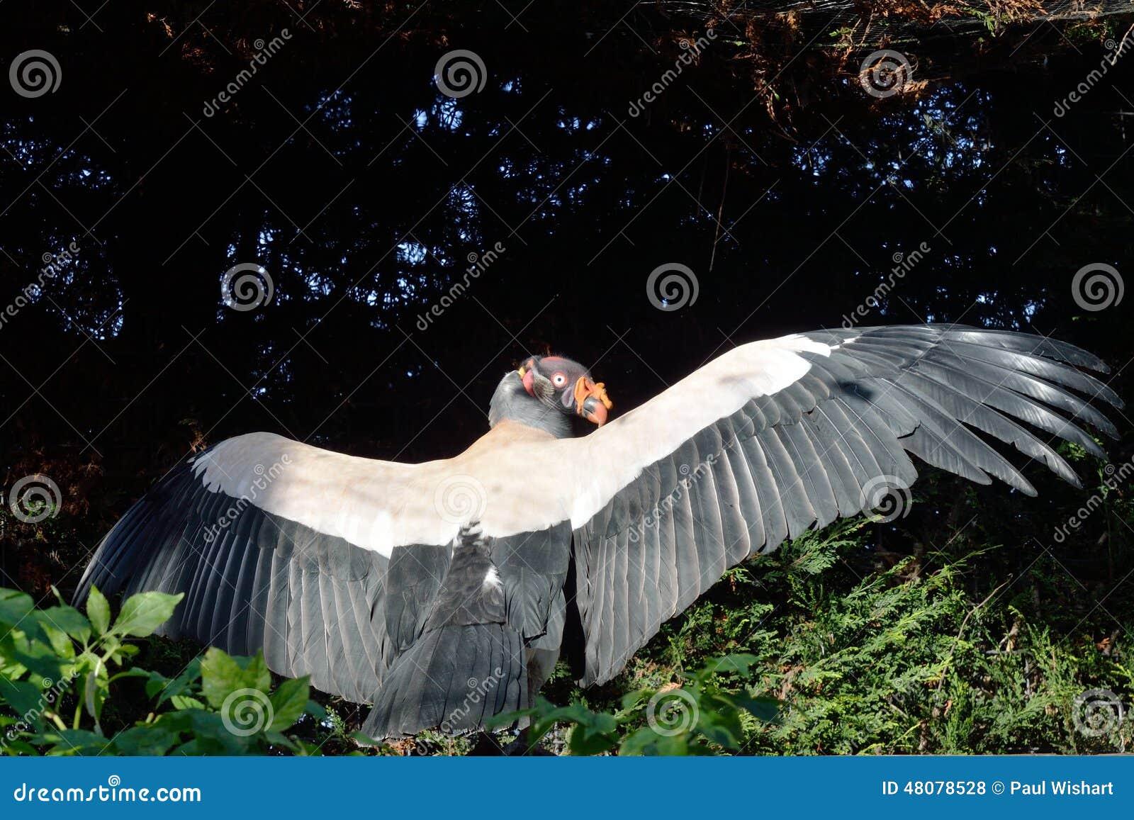 Μεγάλος μπαμπάς μεγάλο πουλί