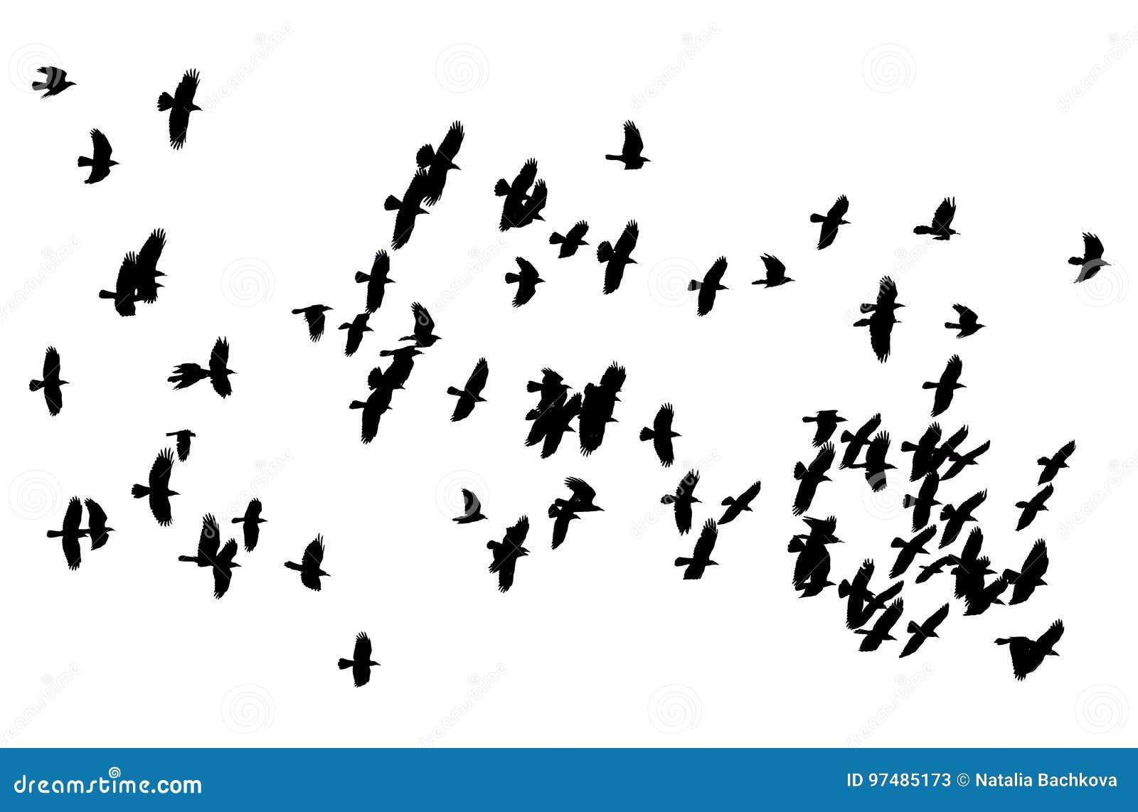 μεγάλο λευκό πουλί vs μεγάλο μαύρο πουλί