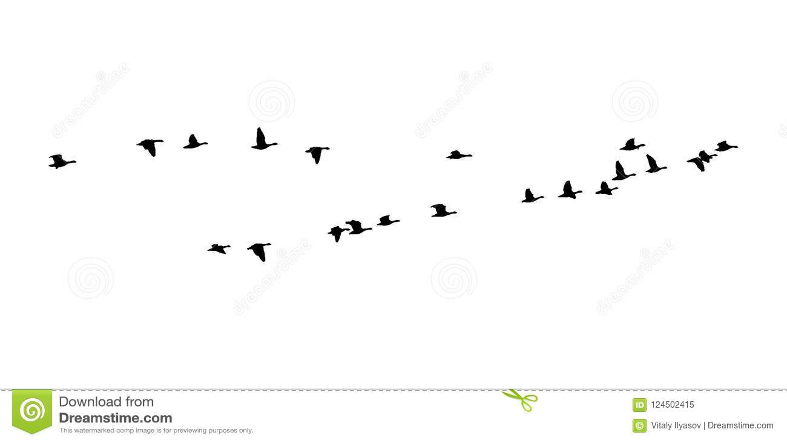 Μεγαλύτερη λευκομέτωπη σφήνα χήνων κατά την πτήση Διανυσματική σκιαγραφία ένα κοπάδι των πουλιών