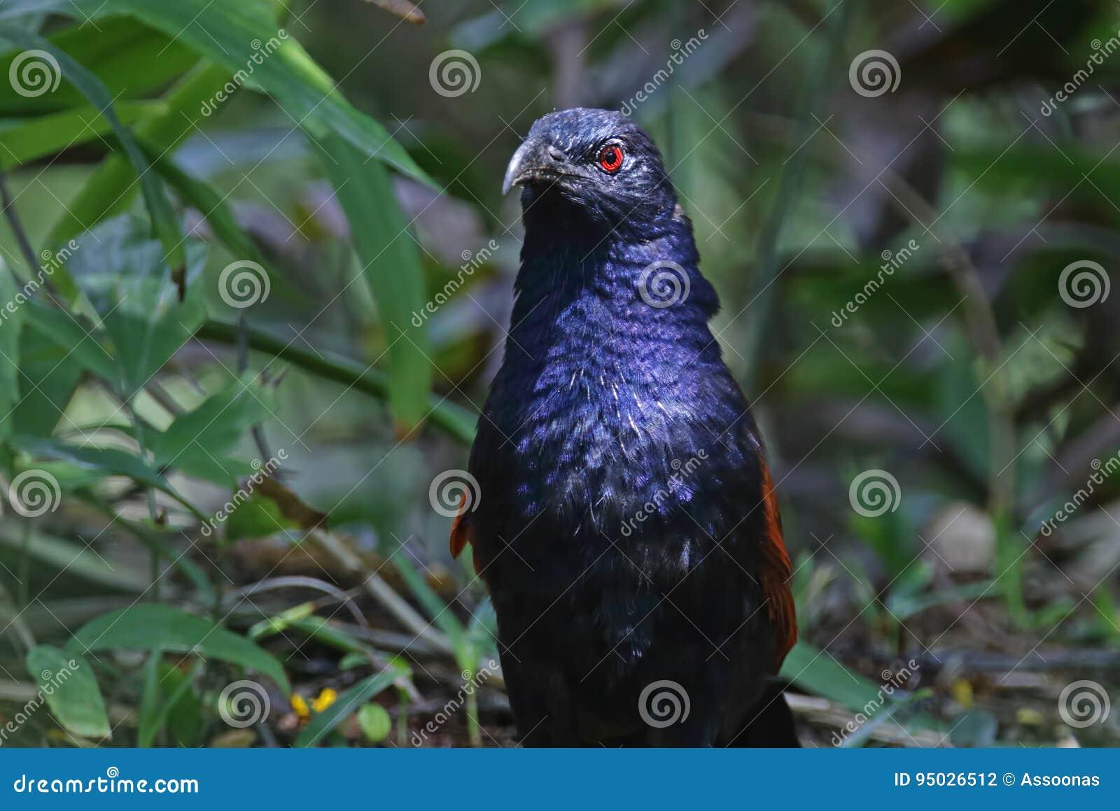 μαύρο gloryhole πορνό