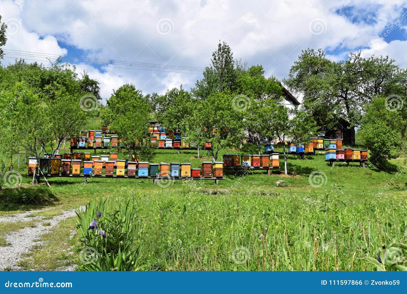 Μελισσοκομία στο αγροτικό ναυπηγείο κατά τη διάρκεια της άνοιξη