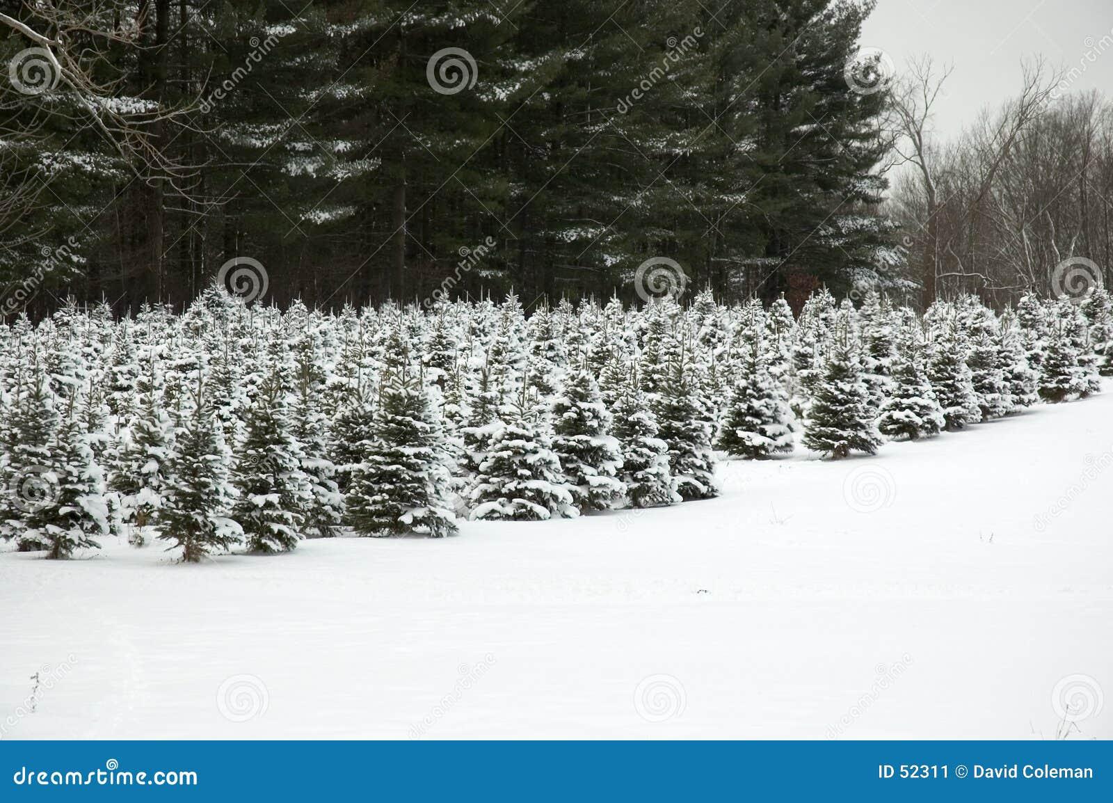 Download μελλοντικά δέντρα Χριστουγέννων Στοκ Εικόνα - εικόνα από δέντρα, άσπρος: 52311