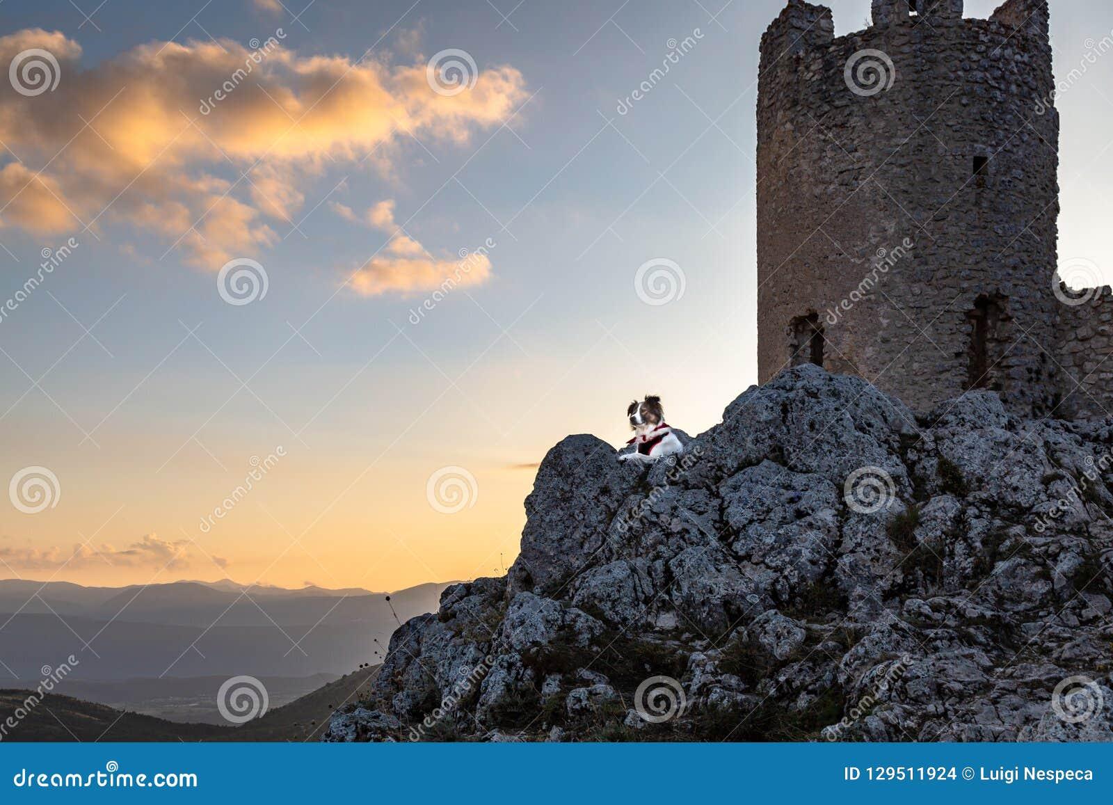 Μελωδία ο φύλακας σκυλιών του κάστρου - Rocca Calascio