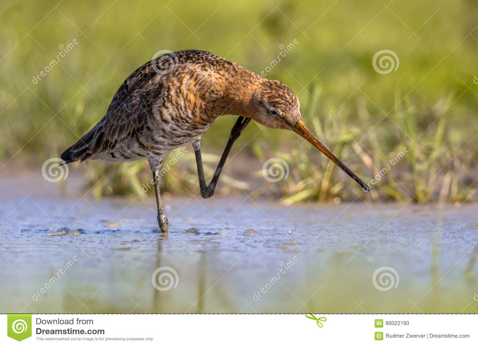 μεγάλο πουλί κάτω από το λαιμό Milf σαν μεγάλο μαύρο κρουνός