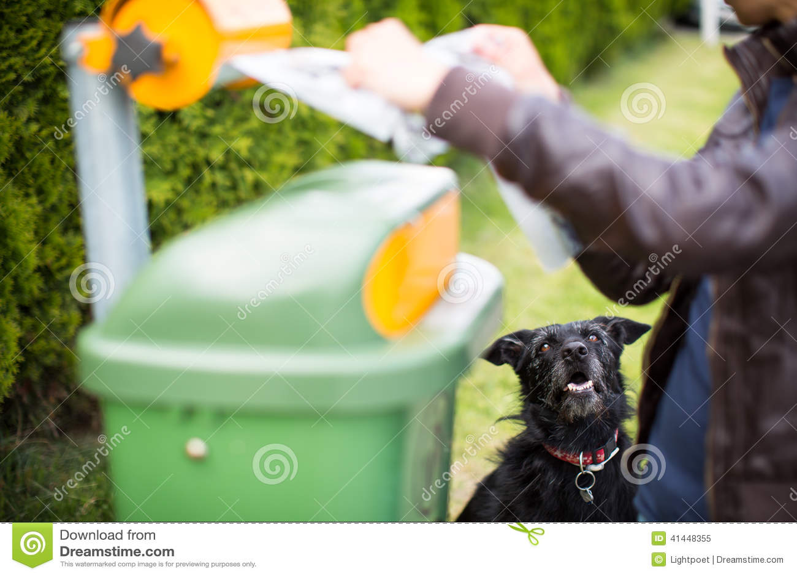 Μην αφήστε το σκυλί σας faul!