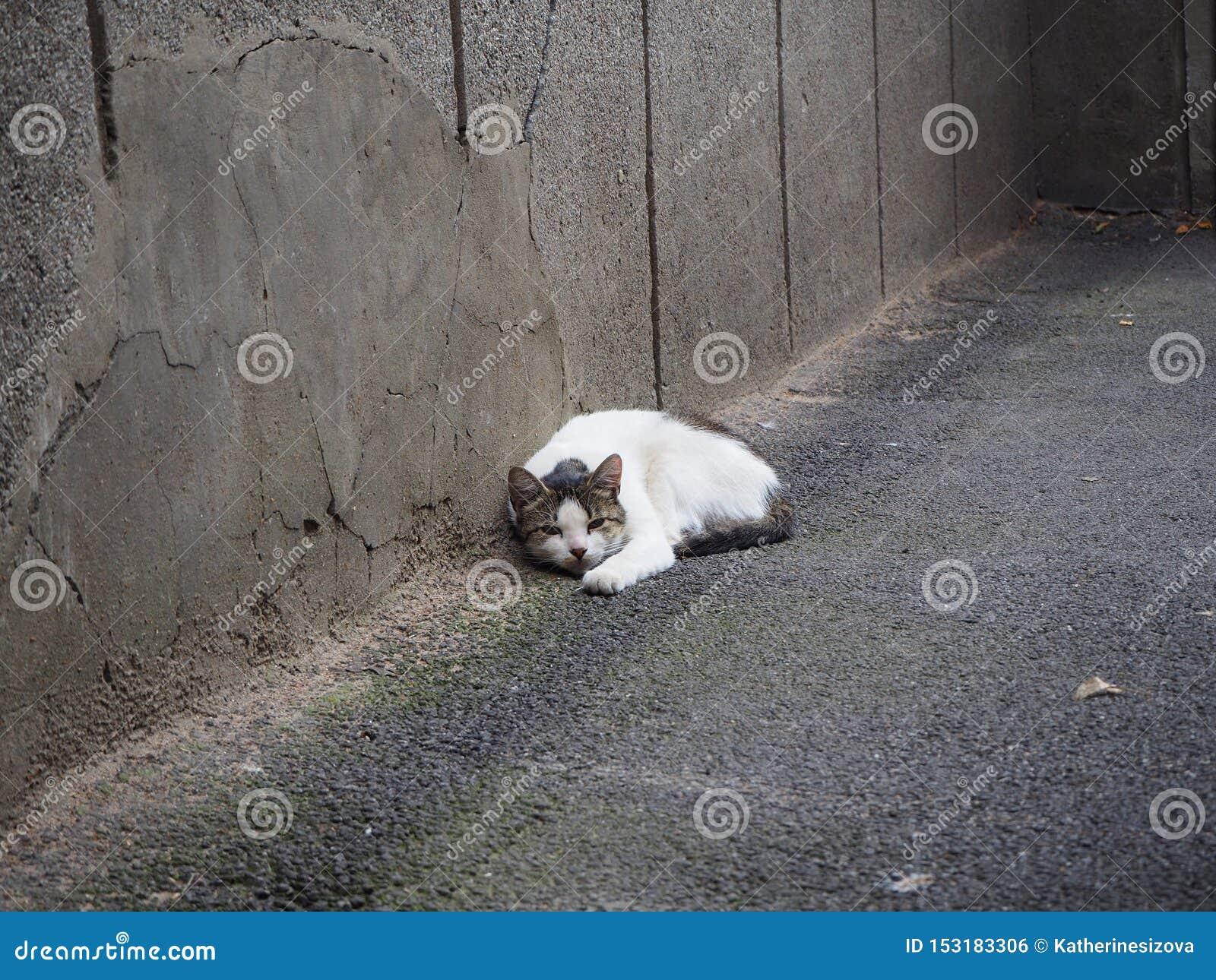 Μια άστεγη άσπρη γάτα βρίσκεται στην οδό