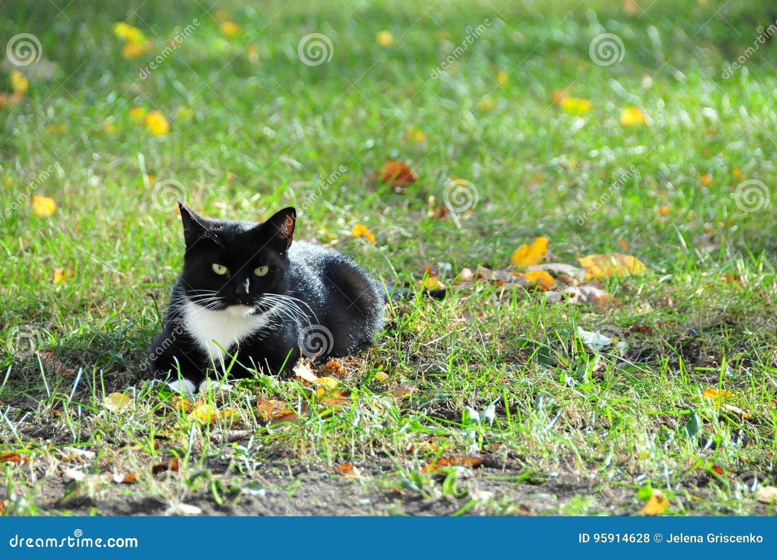 Μια ήρεμη γραπτή γάτα
