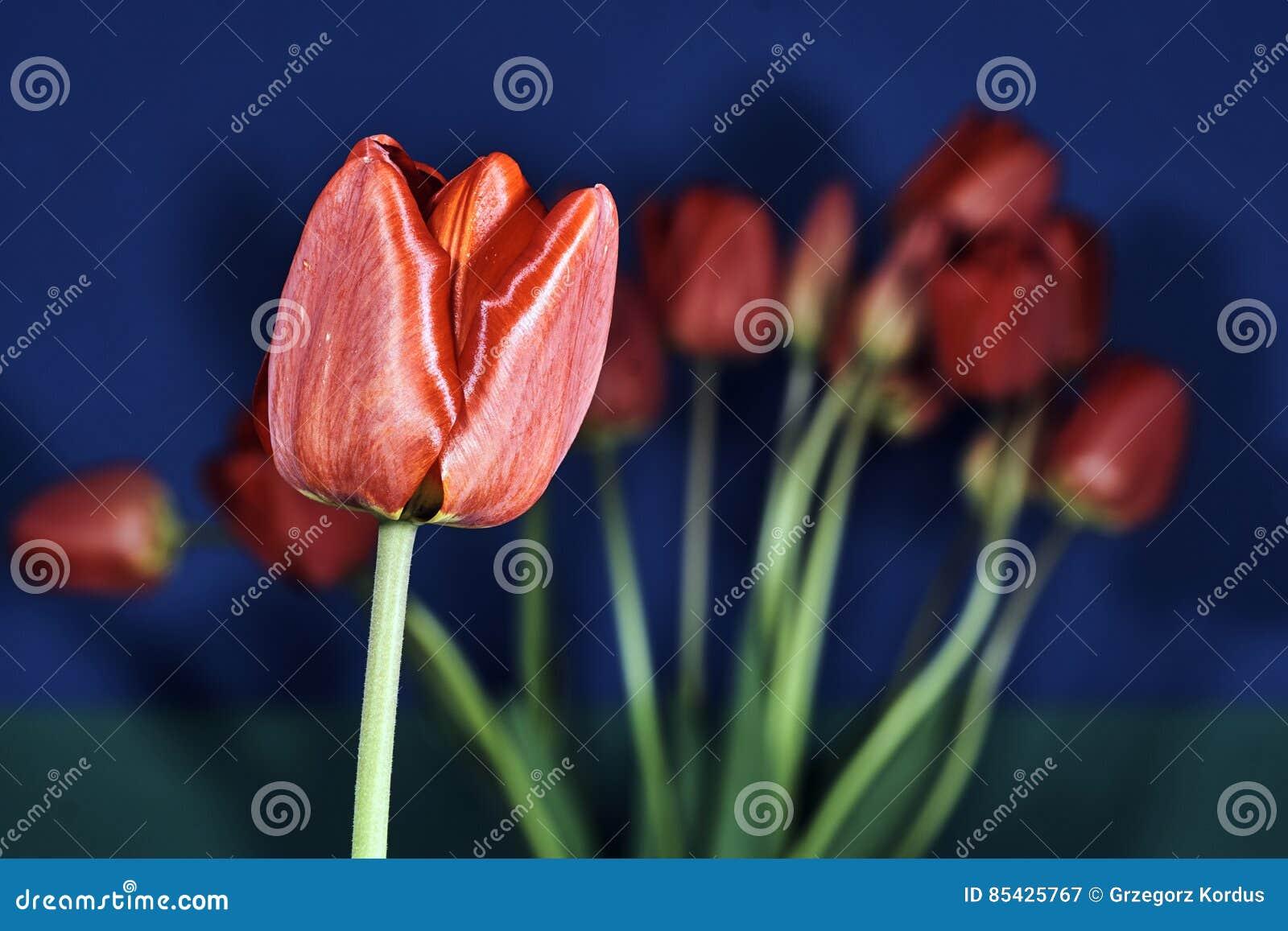 Μια ανθοδέσμη των όμορφων λουλουδιών των τουλιπών
