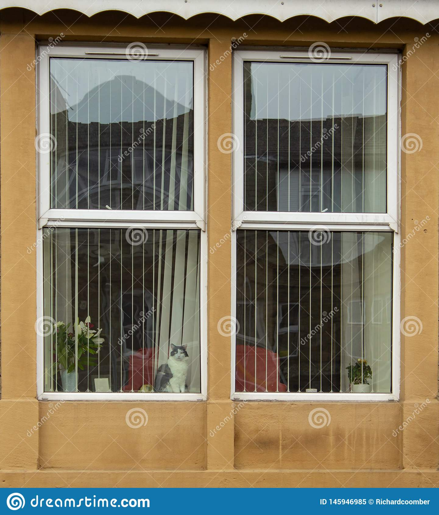 Μια γάτα κοιτάζει επίμονα από το παράθυρο, προσέχοντας τον κόσμο περάστε