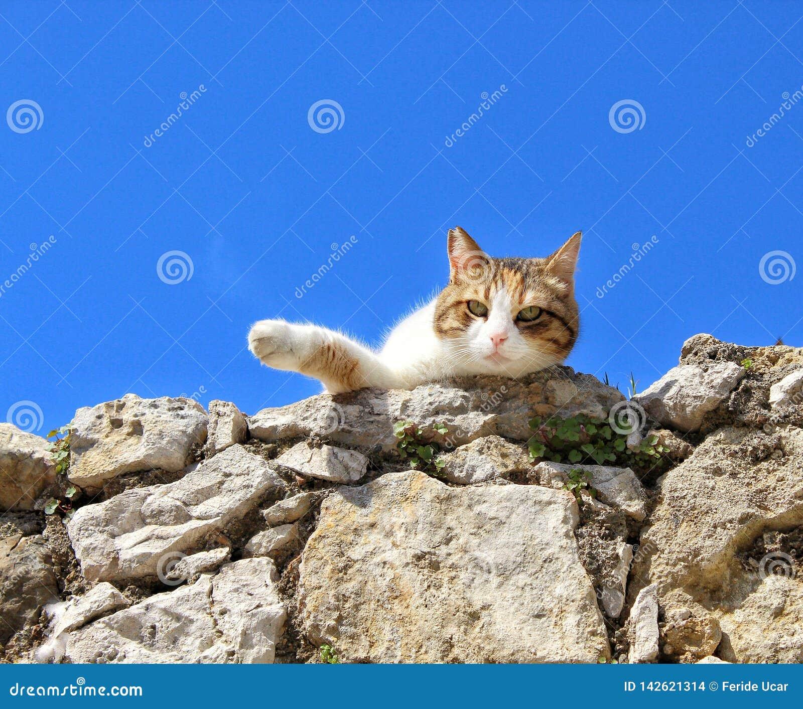 Μια γάτα ξαπλώνει