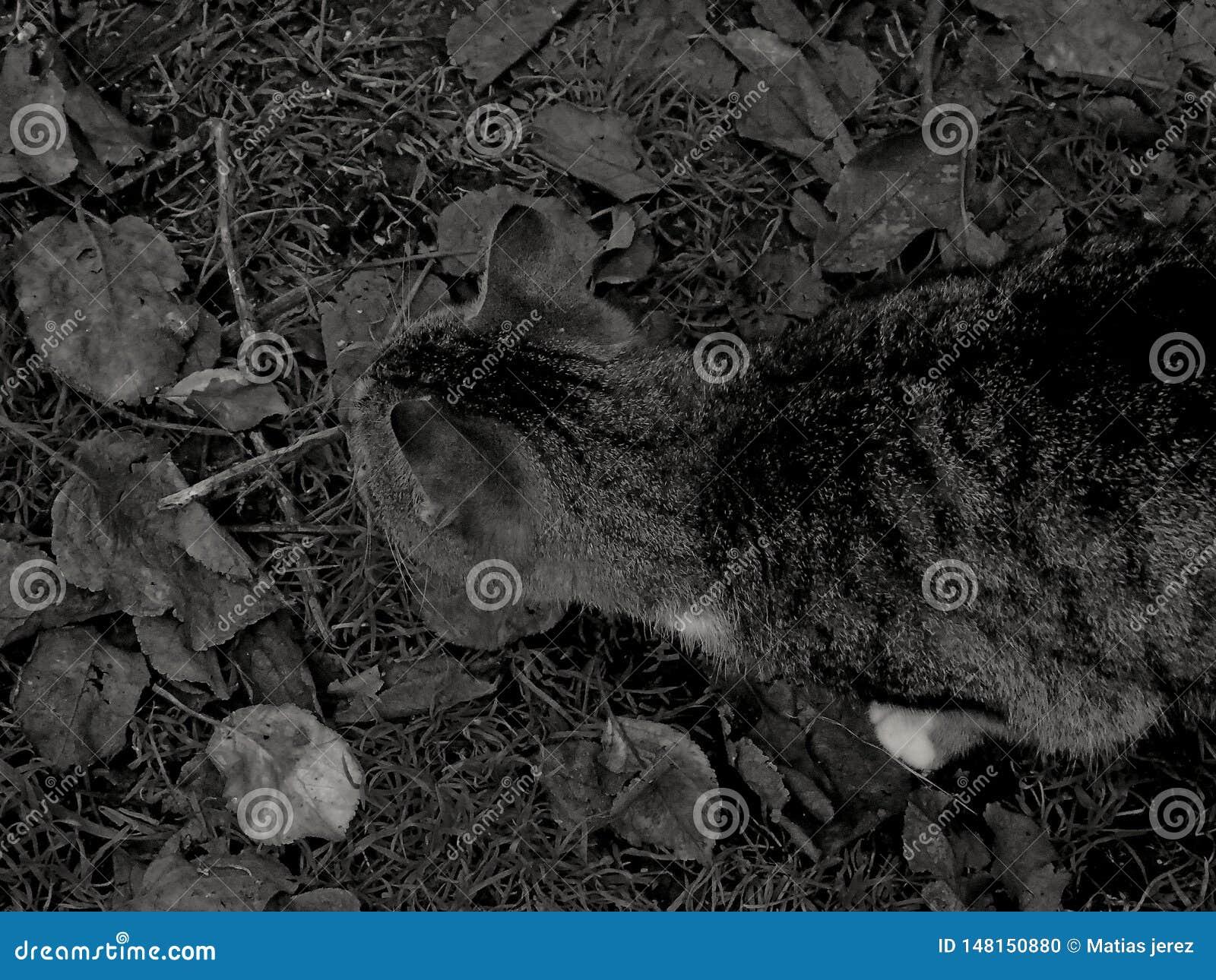 Μια γάτα στη γη
