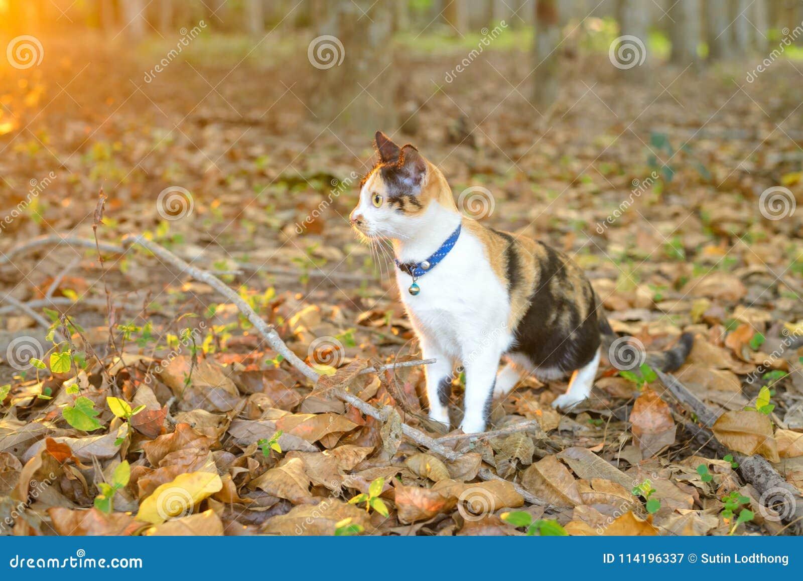 Μια γάτα στο δάσος