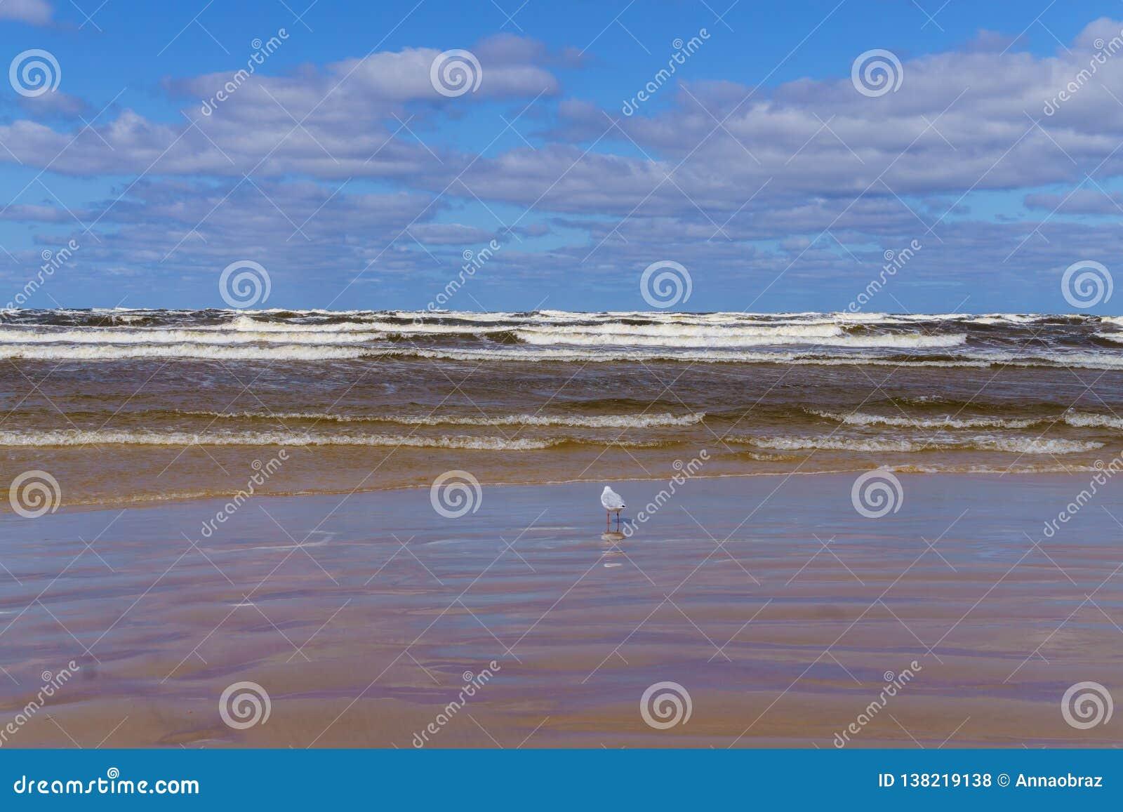 Μια θυελλώδης ημέρα στην ακτή του Κόλπου της Ρήγας Jurmala, Λετονία