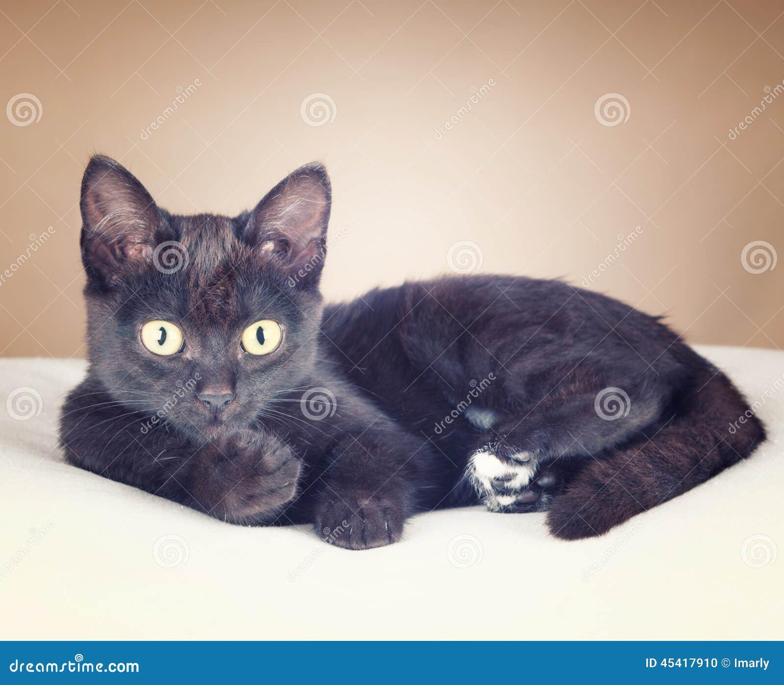 6a99c02ebd3e Μια μαύρη γάτα που στηρίζεται σε ένα μαξιλάρι σε ένα καφετί υπόβαθρο και  που εξετάζει σας