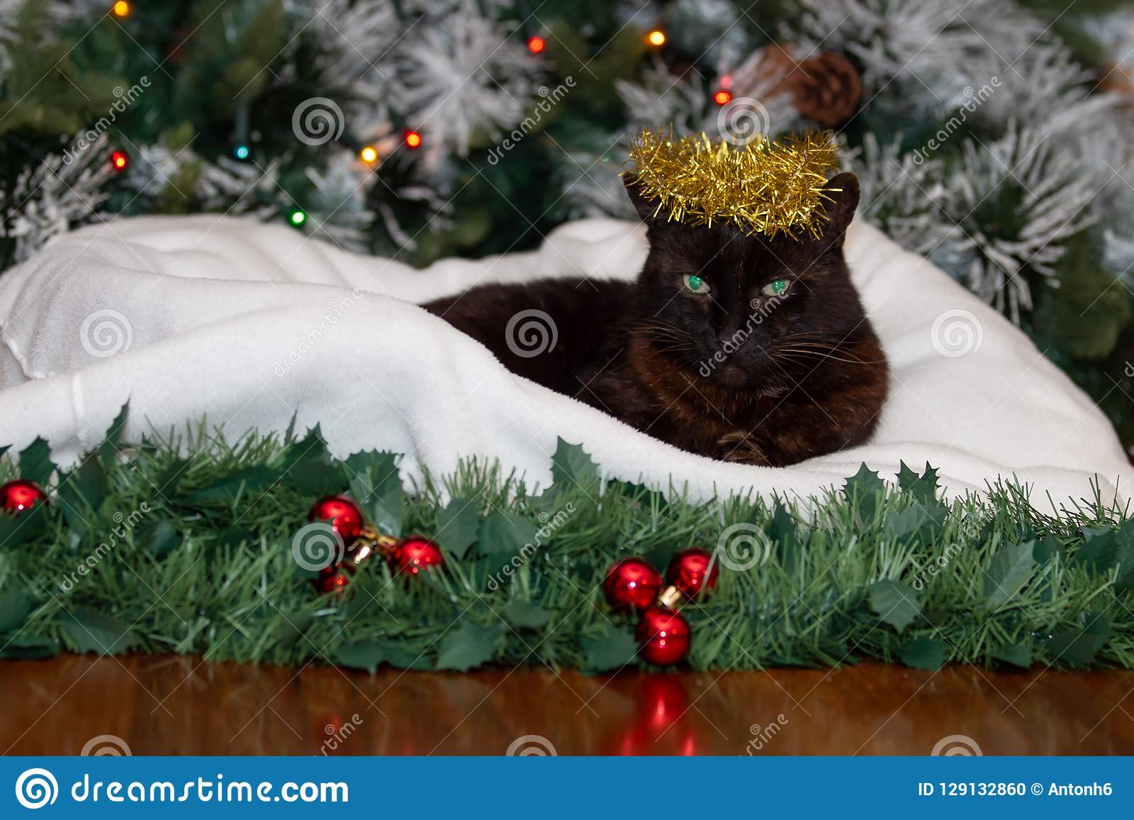 Μια μαύρη γάτα που φορά μια κορώνα χρυσό tinsel Χριστουγέννων
