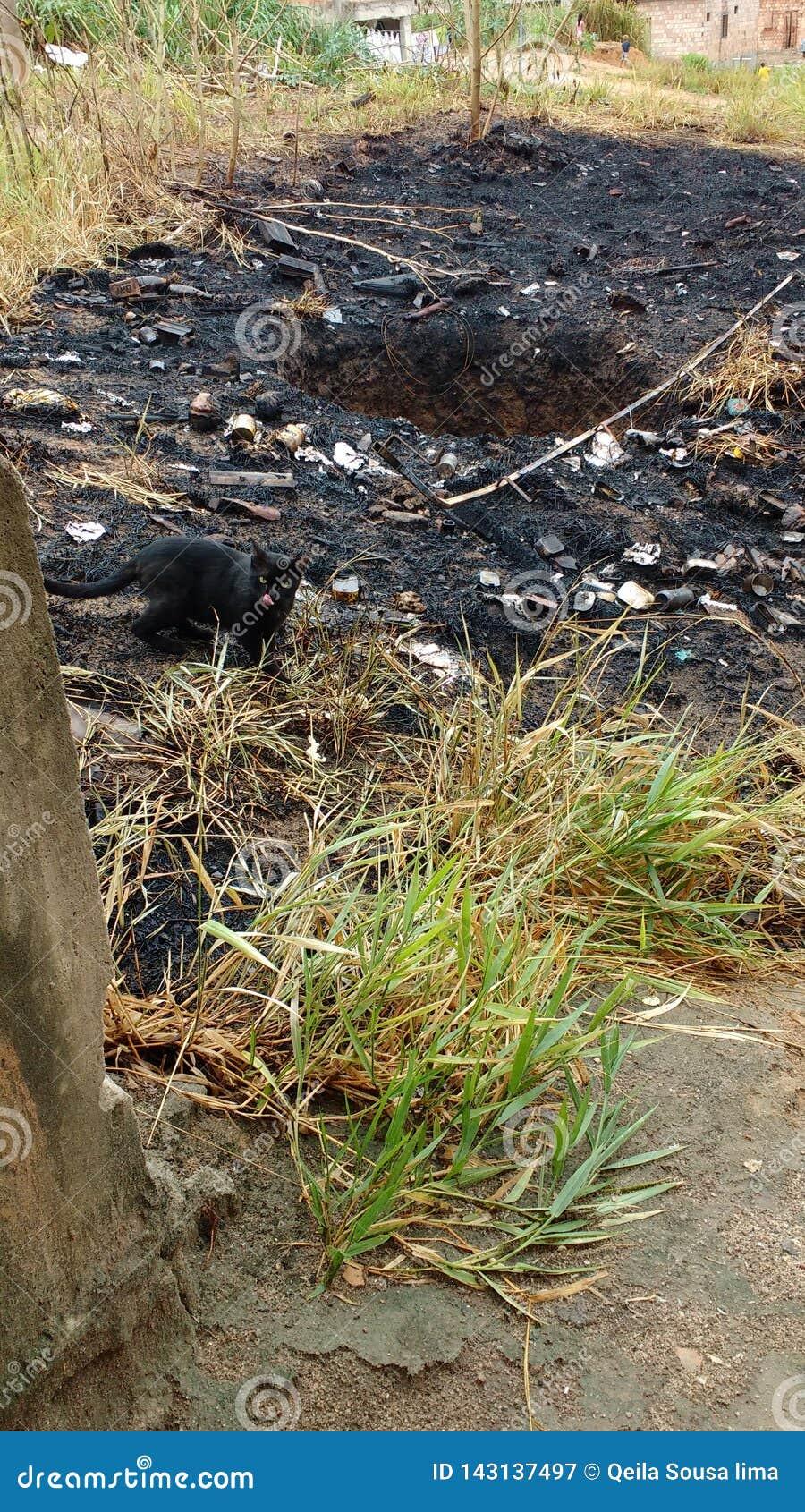 Μια μαύρη γάτα στη μέση του μμένου δάσους, που ψάχνει τα τρόφιμα