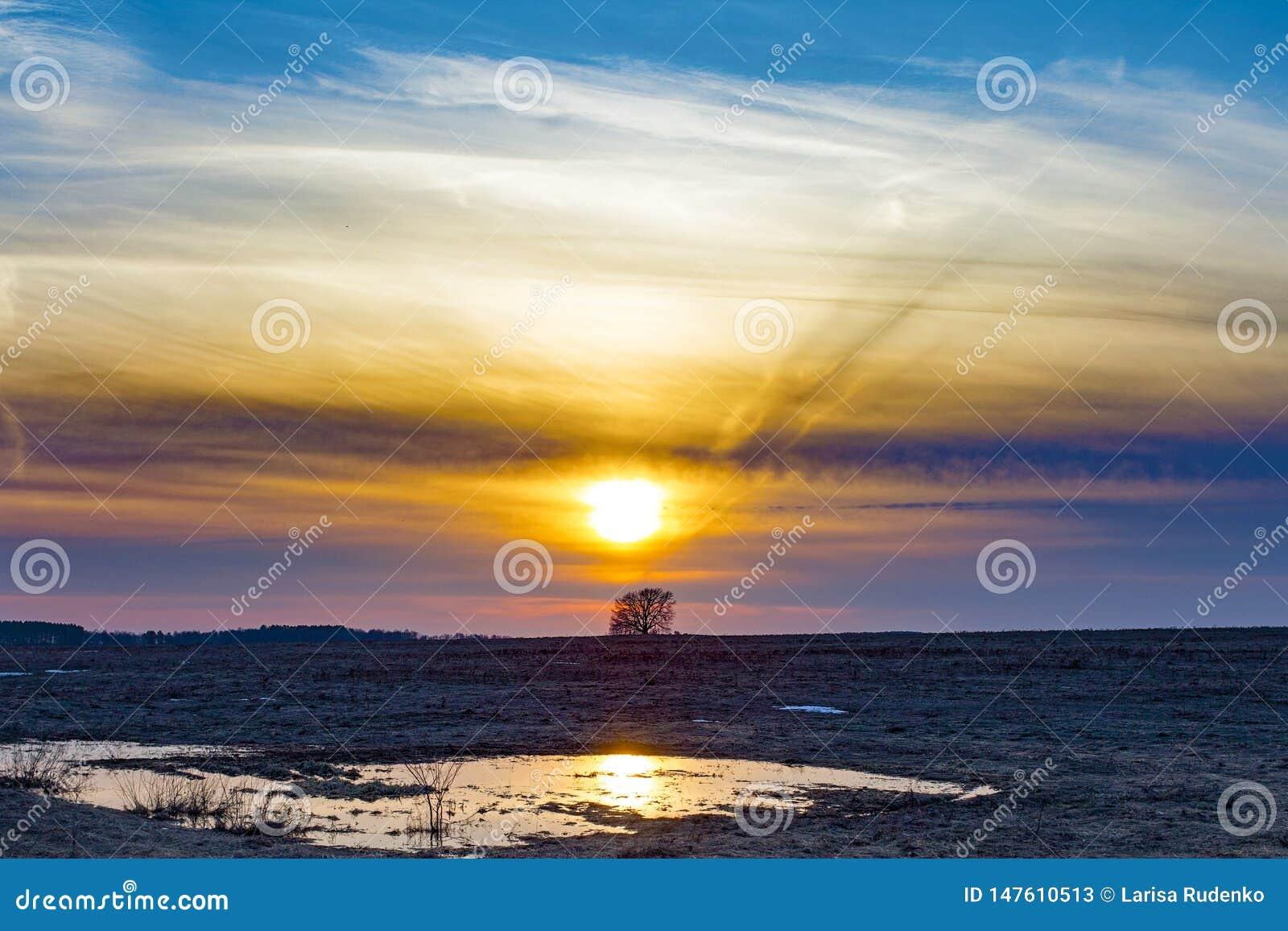 Μια μόνη βαλανιδιά σε έναν τομέα στο ηλιοβασίλεμα