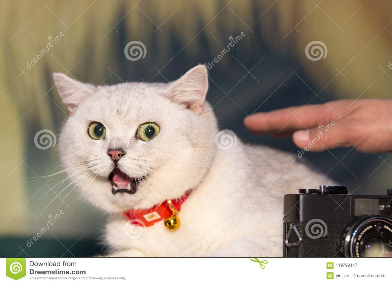 Μια παχιά γάτα με μια πλούσια έκφραση