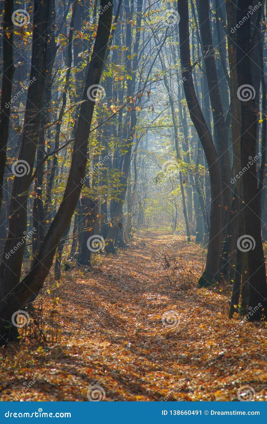 Μια πορεία μέσω του παραδείσου
