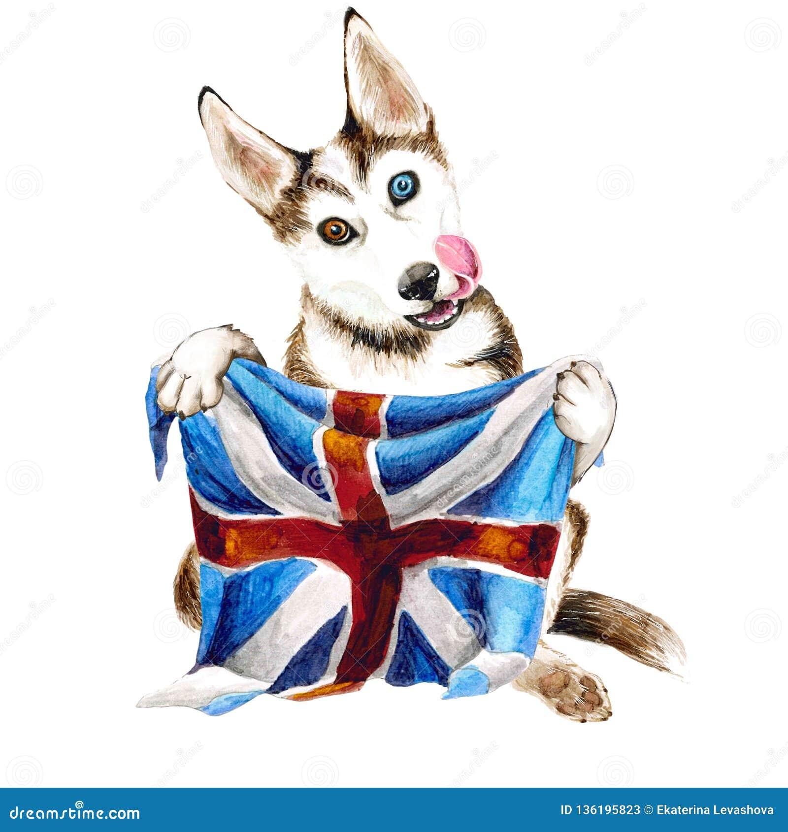 Μια φυλή σκυλιών γεροδεμένη κρατά στα πόδια του τη σημαία της Μεγάλης Βρετανίας η ανασκόπηση απομόνωσε το λευκό Απεικόνιση κουταβ