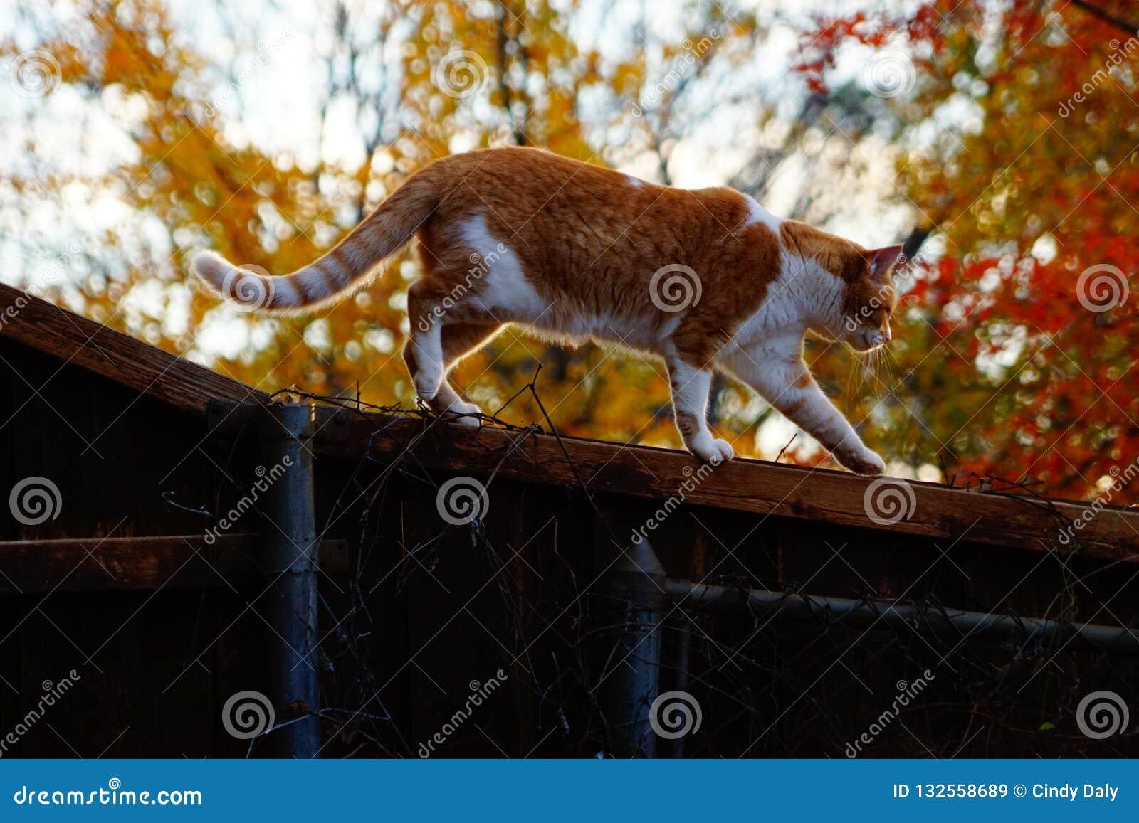 Μια φωτογραφία μιας κίτρινης τιγρέ γάτας σε έναν φράκτη