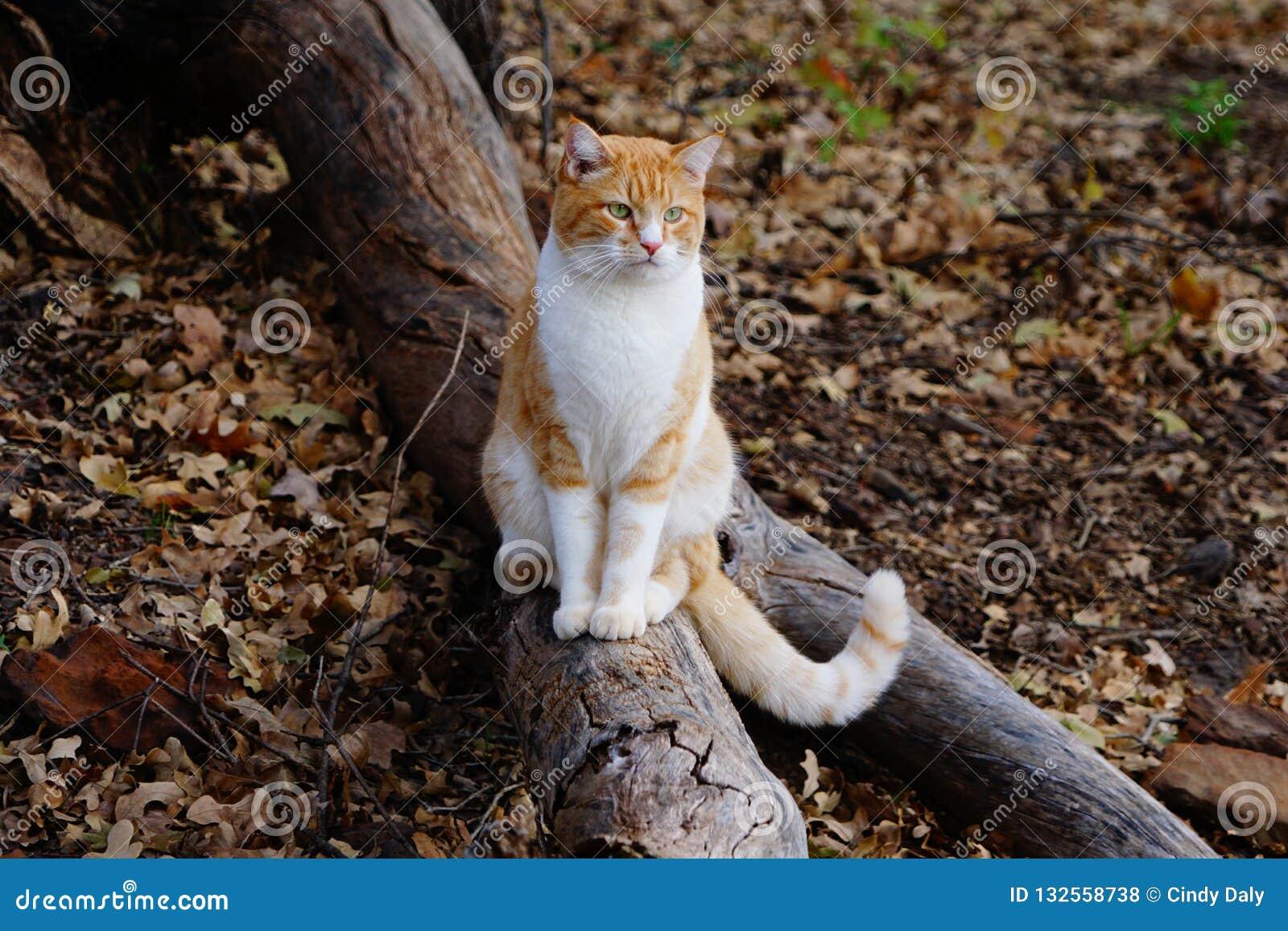 Μια φωτογραφία μιας κίτρινης τιγρέ γάτας