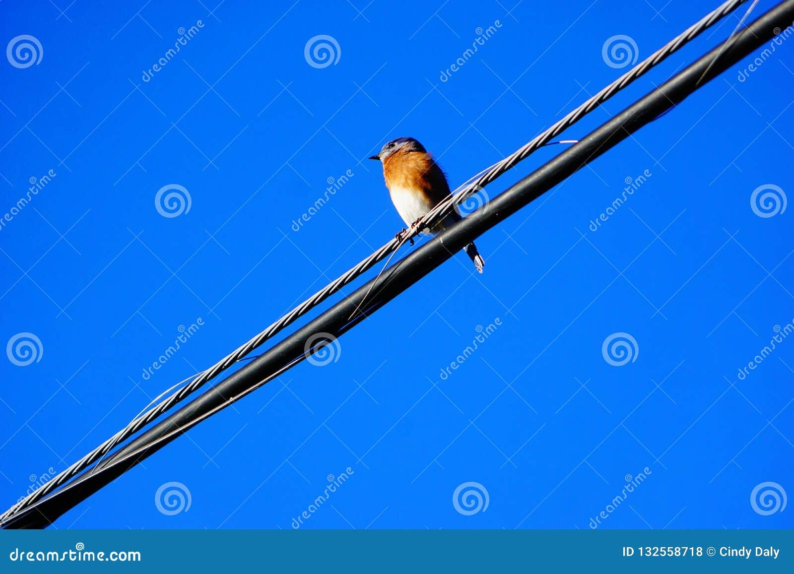 Μια φωτογραφία μιας συνεδρίασης πουλιών σε ένα καλώδιο