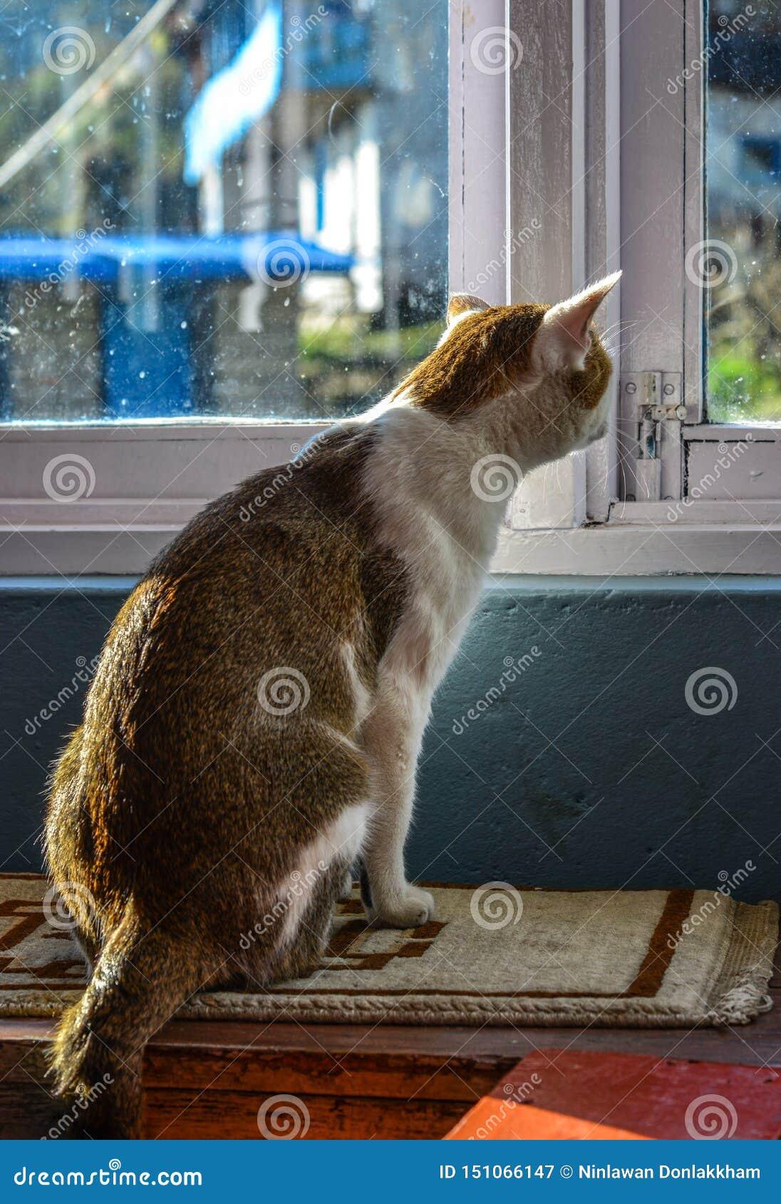 Μια χαριτωμένη χαλάρωση γατών στο αγροτικό σπίτι