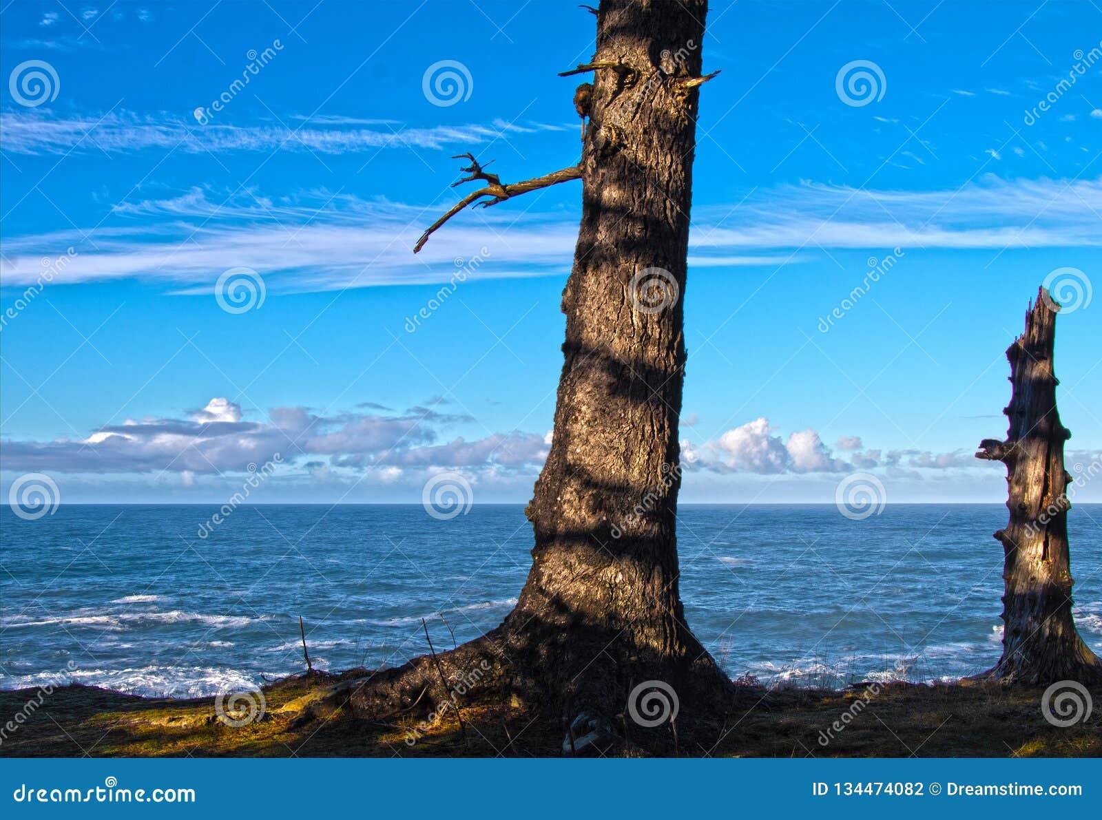 Μια ωκεάνια άποψη δέντρων του φεγγαριού