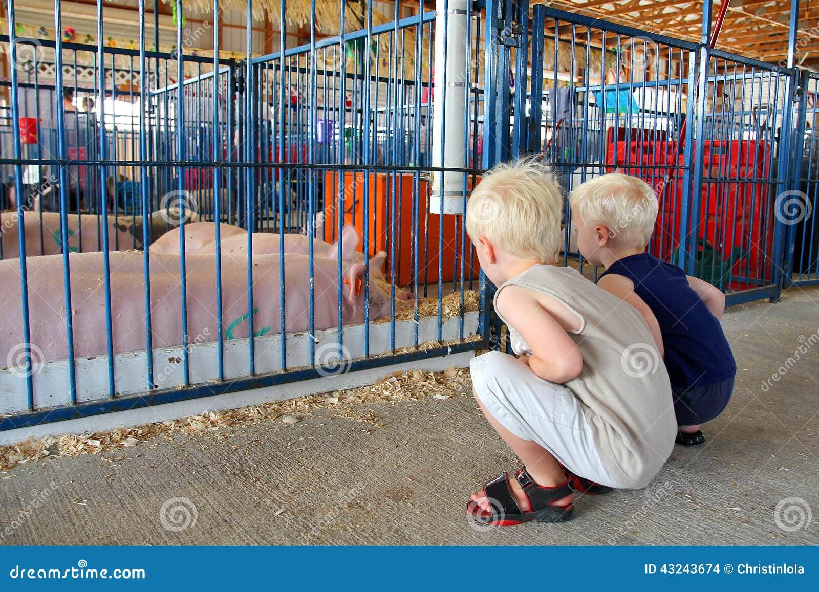 Μικρά παιδιά που εξετάζουν τους χοίρους στην έκθεση κομητειών