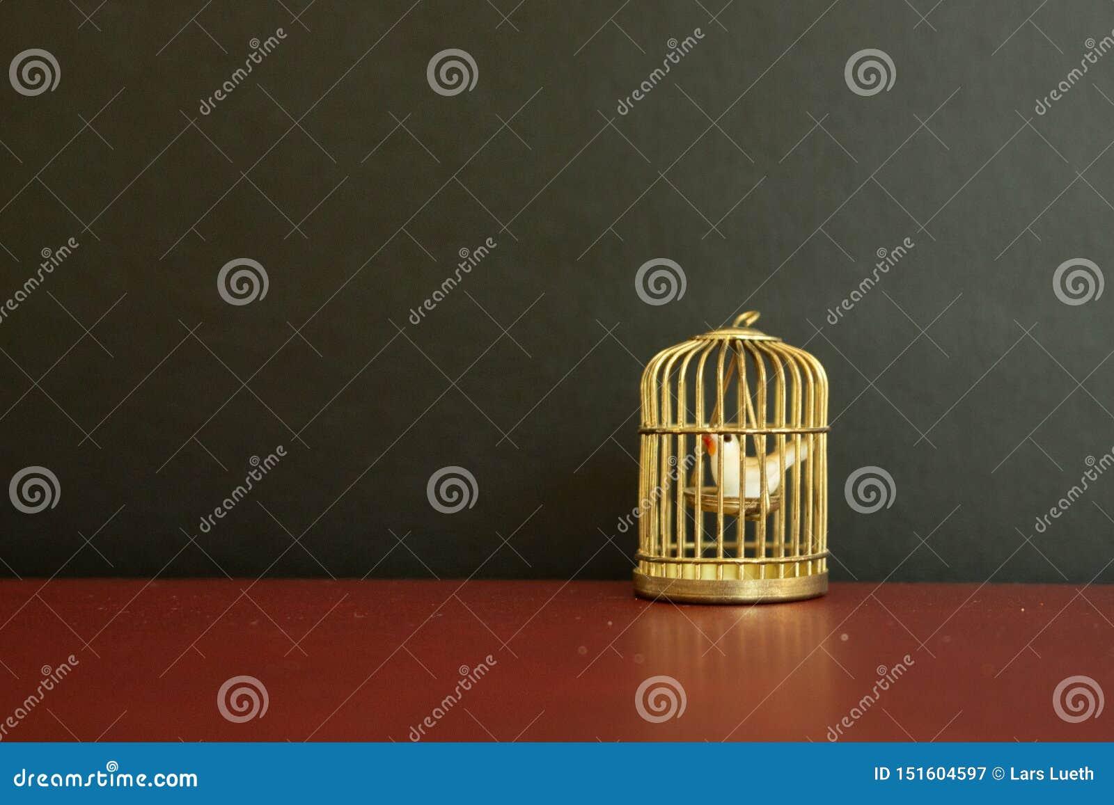 Μικροσκοπικό χρυσό birdcage με λίγο άσπρο περιστέρι μέσα στο μαύρο υπόβαθρο