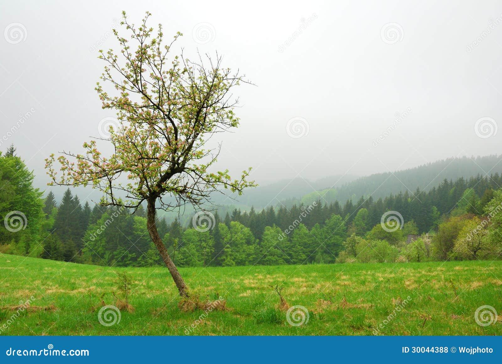 Μικρό δέντρο κερασιών