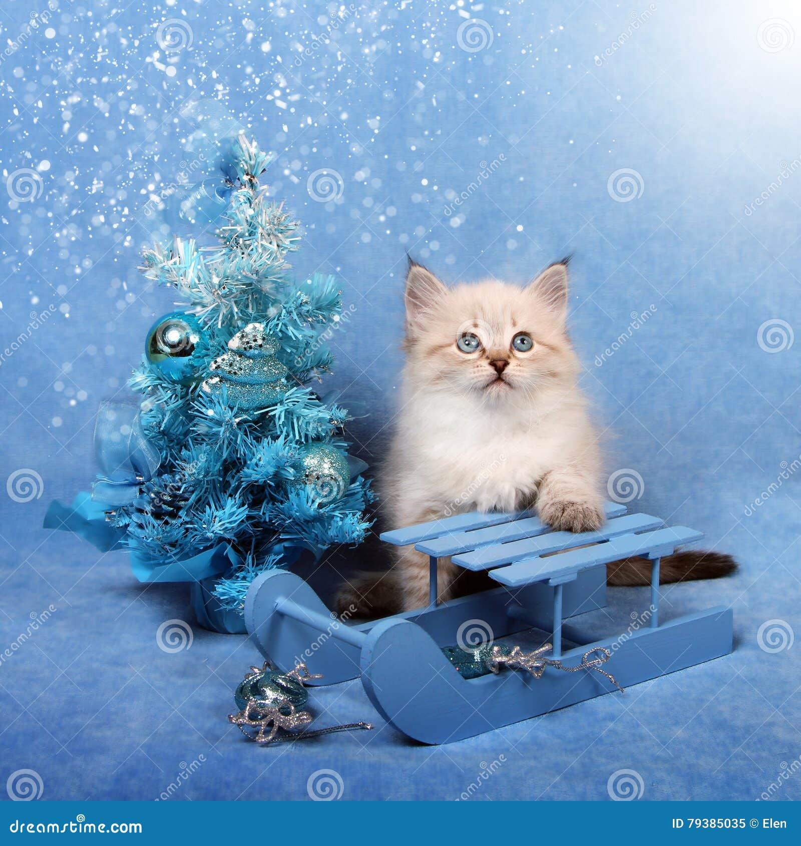 Μικρό γατάκι στο έλκηθρο και το χριστουγεννιάτικο δέντρο