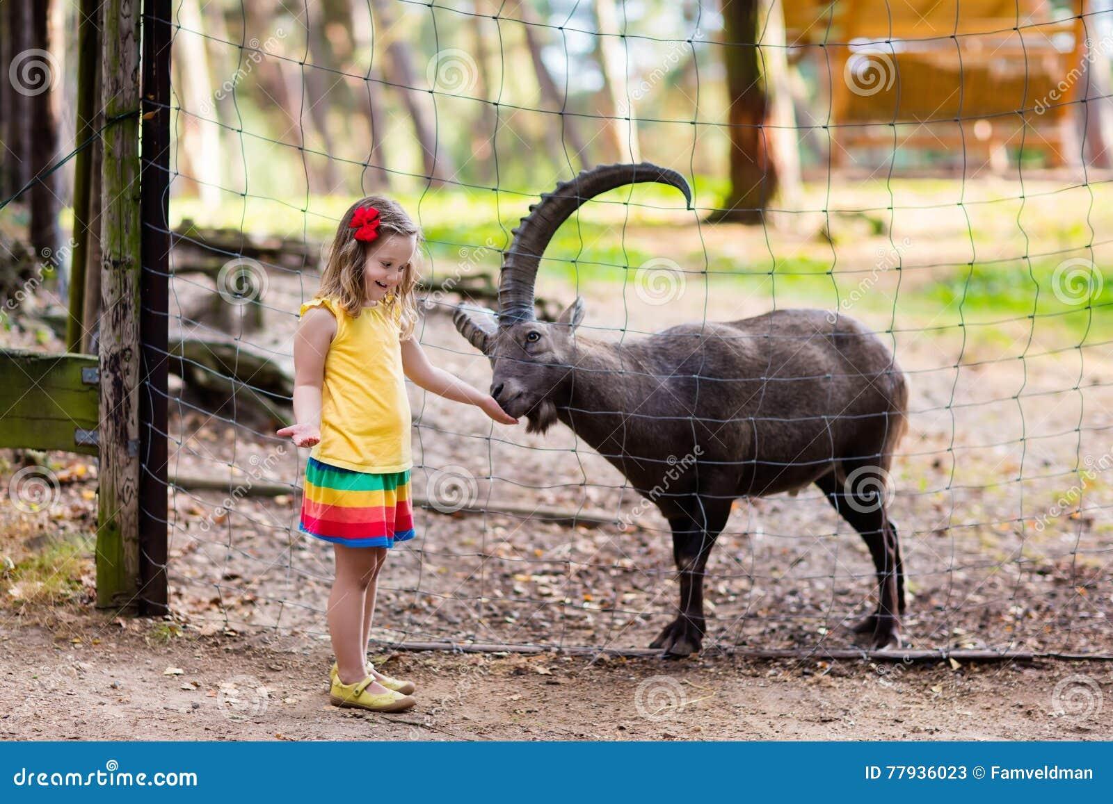 Μικρό κορίτσι που ταΐζει την άγρια αίγα στο ζωολογικό κήπο