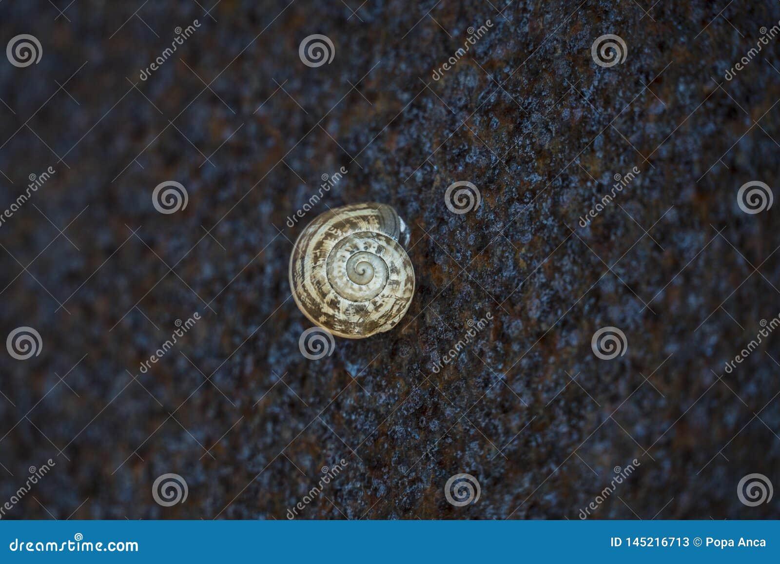 Μικρό κοχύλι σαλιγκαριών που κολλιέται σε έναν τοίχο