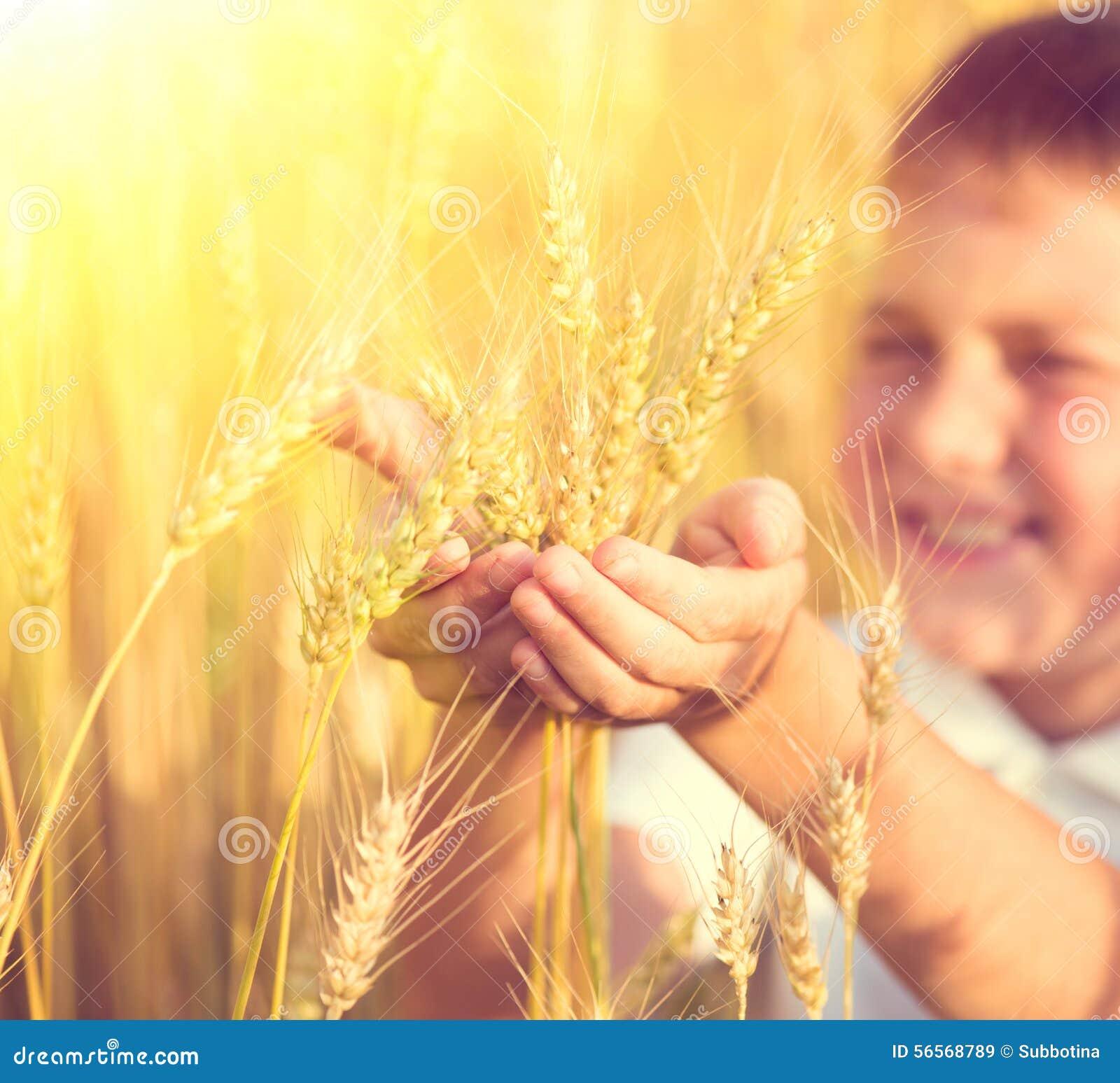 Download Μικρό παιδί που παίρνει τα αυτιά σίτου Στοκ Εικόνα - εικόνα από τρόφιμα, ξεράνετε: 56568789