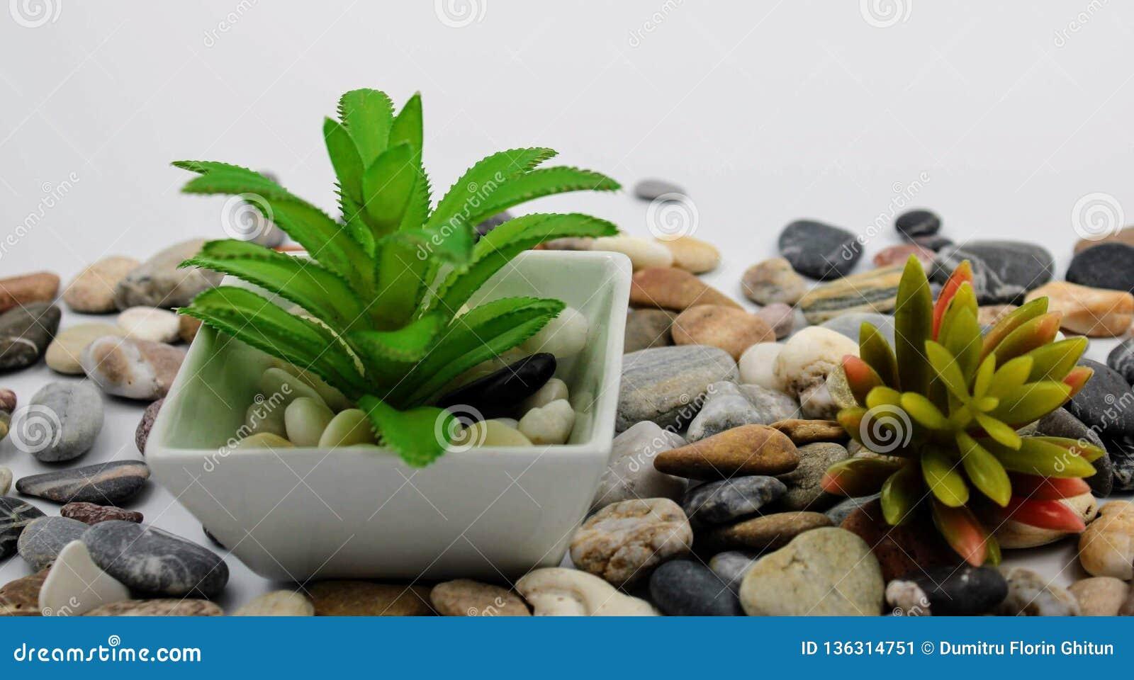 Μικρό flowerpot με τις εγκαταστάσεις