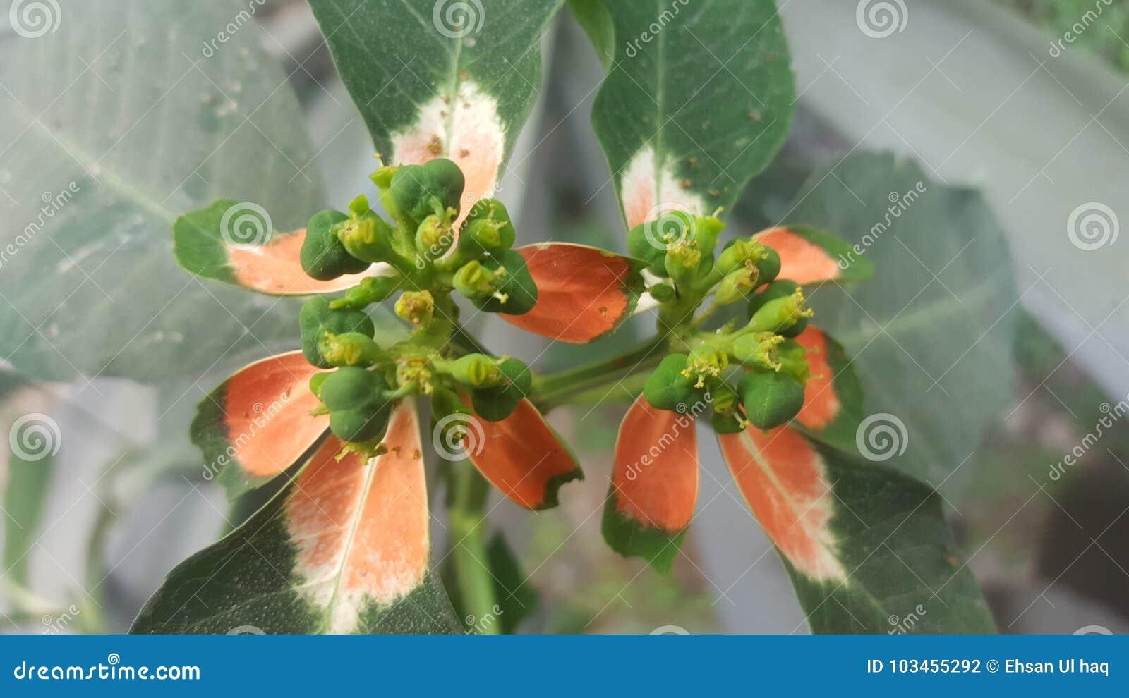 Μοναδική εικόνα του λουλουδιού