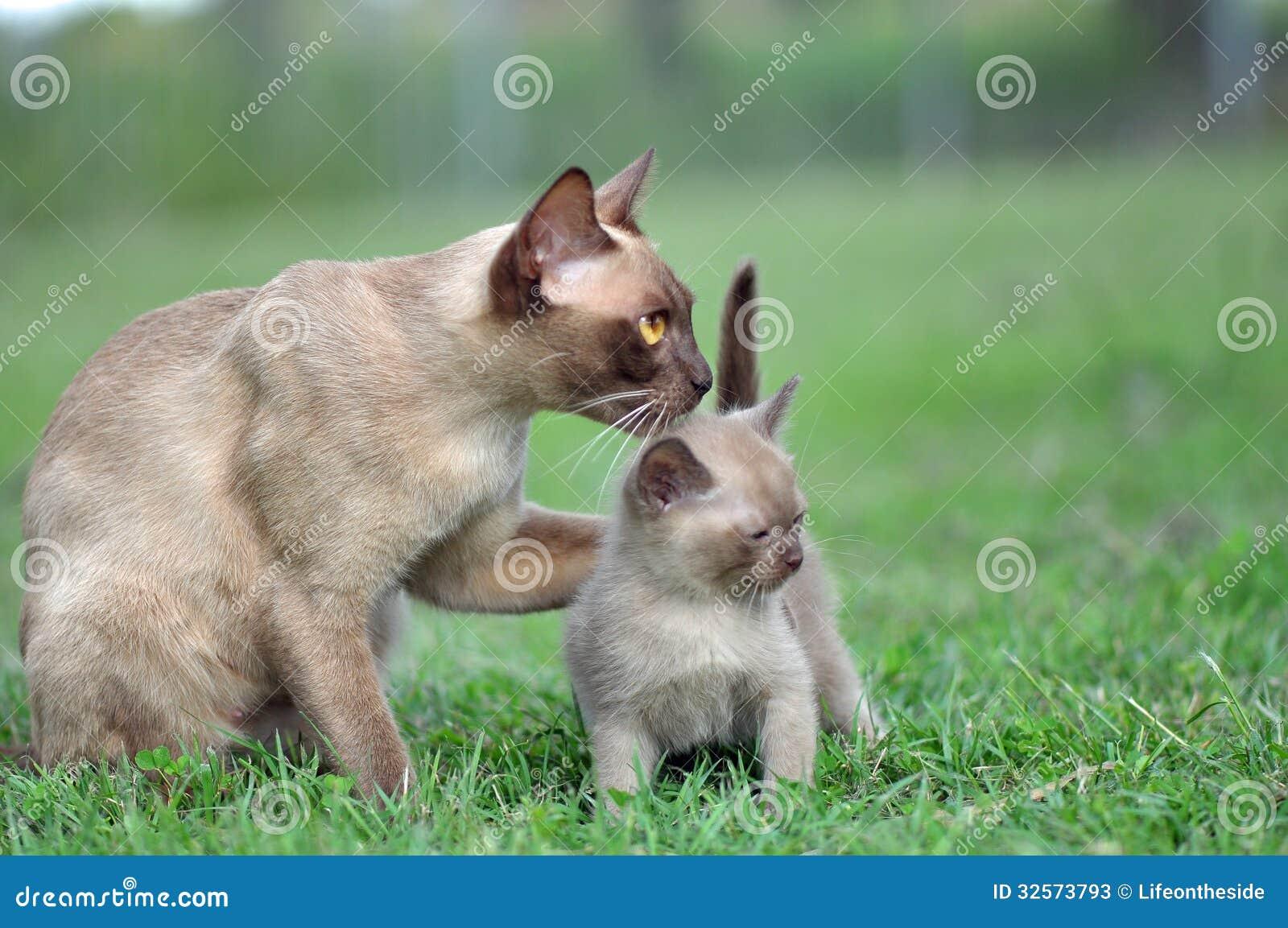 Μοναδικό πόδι γατών μητέρων πορτρέτου γύρω από το γατάκι μωρών