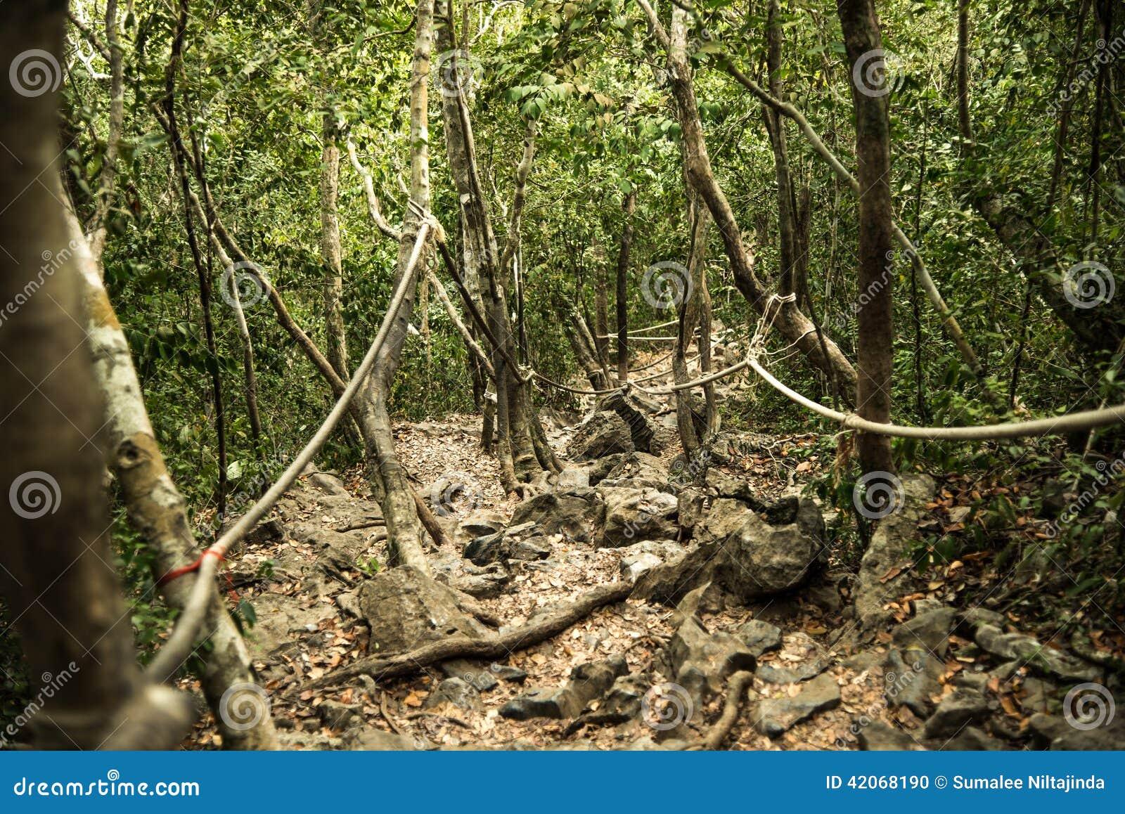 μονοπάτι στο δάσος