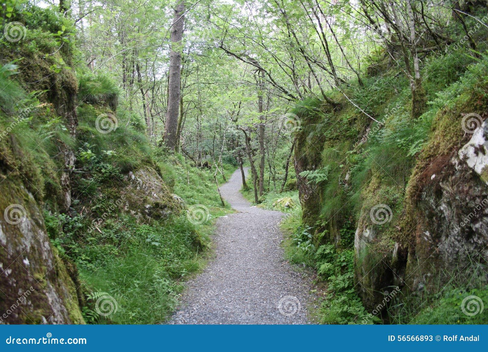 Download Μονοπάτι στο δάσος στοκ εικόνα. εικόνα από δάσος, μονοπάτι - 56566893