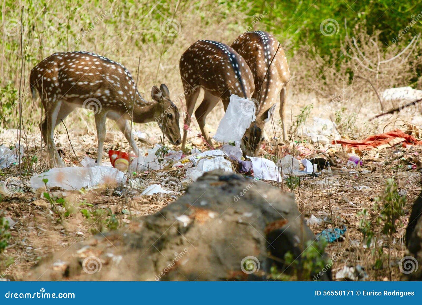 Download Μολυσμένα δάση - στοκ εικόνα. εικόνα από μολυσμένος, σάρωση - 56558171