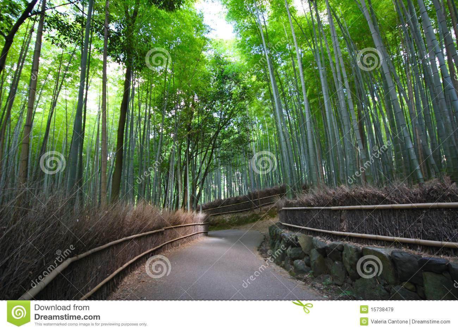 μπαμπού δασική Ιαπωνία Κιότ&omi